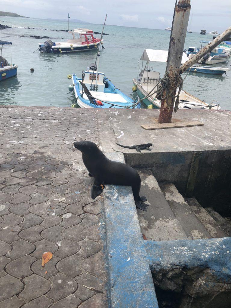 Sea Lion at fish market
